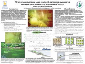 Metaphyton Poster Img