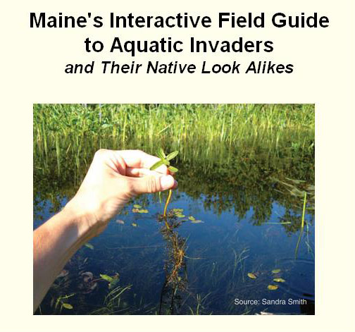 Interactive Field Guide