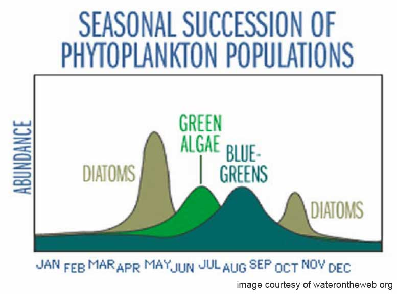 Seasonal Succession of Phytoplankton from WaterOnTheWeb.org